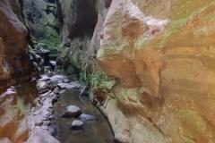SteeleyCarnarvon Gorge20180407_151029